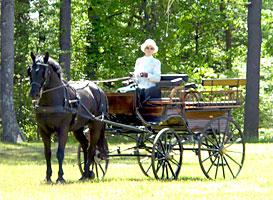 Horse Carriage Photos